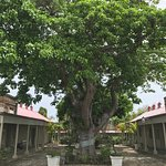 Tree in the main courtyard.