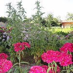 Le jardin potager bio