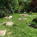 krakow zoo - flamingos