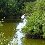 Photo of Teich Bird Reserve