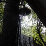 Photo de Jaci's Tree Lodge