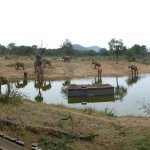 view of the watering hole incl. Terrapin Hide