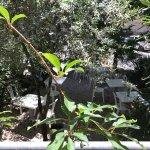 Pleasant, shaded garden