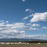 Under Canvas Yellowstone Foto