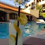 Wildcat Lemonade