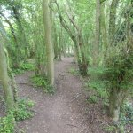Long Melford Country Park 1st June 2017.