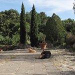 Gugliemo, Sebastiano e Rocco alla Fontana del Papa #feelathome @fontanadelpapa