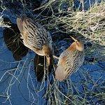 Birdwatching at Bolsa Chica Wetlands Photos Copyright Lorraine Crawford