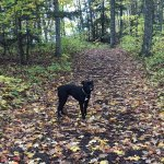 Hiking trails welcome friendly dogs and responsible owners