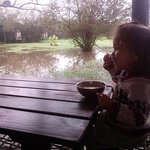 desayunador al aire libre y bajito, para niños, inmediato a la laguna y las aves