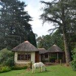 Thunzi Cottage & Braai Area