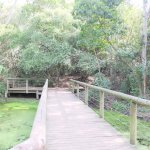 Photo de Monkeyland Primate Sanctuary