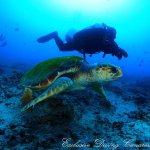 Dive Center Marina Rubicon