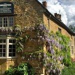 Our wisteria. x