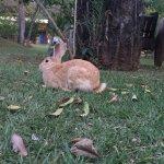 Animais soltos nas propriedades da Pousada