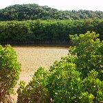 Photo of Gesashi Bay's Mangrove
