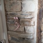 16th century timber with toy mouse in a recess of the wall!