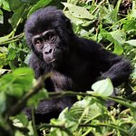 Photo de Bwindi Impenetrable National Park