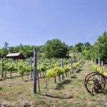 Vineyards overlooking Lake Balaton