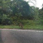 ลิงเข้าป่า