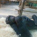 Im Zoo selbst