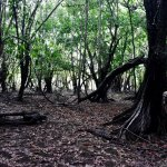 Walk through the Gallery Forest- Karanambu