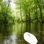 The Pokomoke River