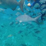 Photo de Cozumel Tours By Johann & Sandra