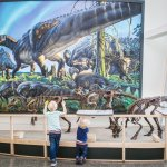Explore Alaska's ancient past thanks to our fossil collection.