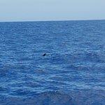 Photo of Flipper Uno