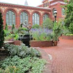 Larkspur beside the Smithsonian Castle were a lovely border, with sedum of several sorts.