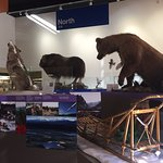 Foto di Anchorage Alaska Public Lands Information Center