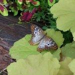 Krohn Conservatory : Butterfly Show