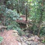 Photo of Jardin Canario