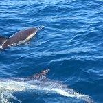 Sagres - Dolphin tour