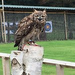 Photo of Cheshire Falconry