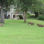 I had to share some of the highlights of this lovely hotel. The visit by the resident hippo was