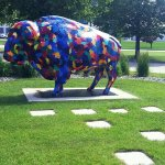 Pretty buffalo in the little park area outside