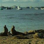 Sea lions on San Cristobal