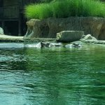 Zoo Exhibit - Mother and Baby Hippo