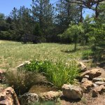 Pond on property...