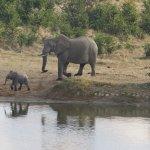Elephants at Masuma