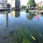 Photo of Waketamaike Spring
