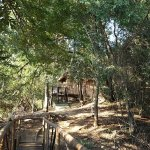 Photo de Marc's Treehouse Lodge
