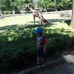 IMG_20170603_151347_large.jpg