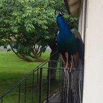Blessingbourne Apartments Photo