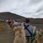 Camel ride