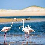 Our resident flamingos