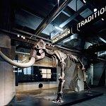 """Mammut in der Abteilung """"Eiszeit"""" der Dauerausstellung"""