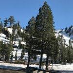 Photo of Alpine Meadows